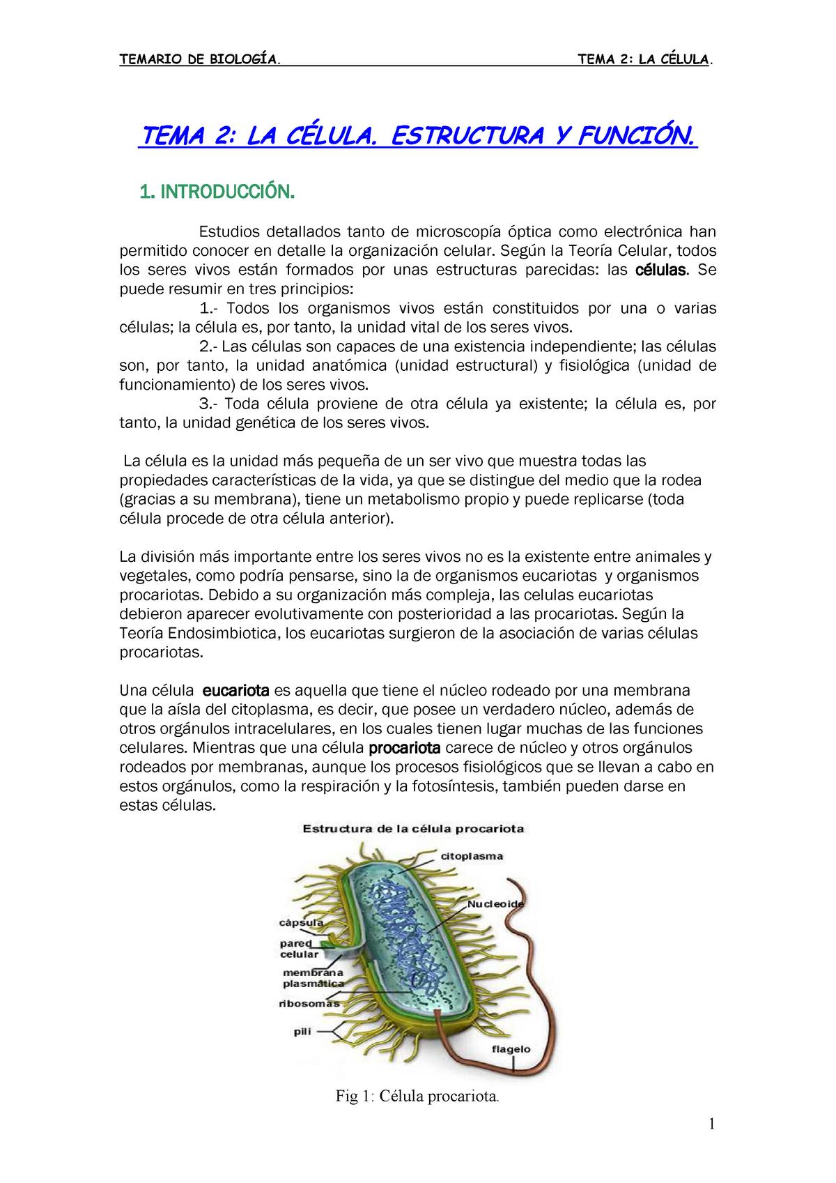 43b6a88358640 E97d20e526f1b43d511 Biología Vu Studocu