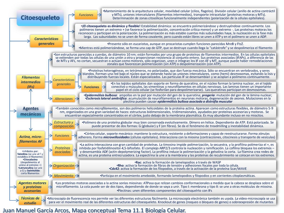 Mapa Conceptual Tema 11 1 Biología Celular 202005 Upo