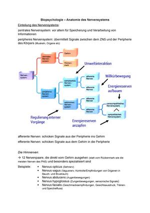 Bio 2 Anatomie - Zusammenfassung Biopsychologie - Biopsychologie