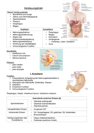 Gastrointestinaltrakt mit Verdauungsdrüsen - Anatomie