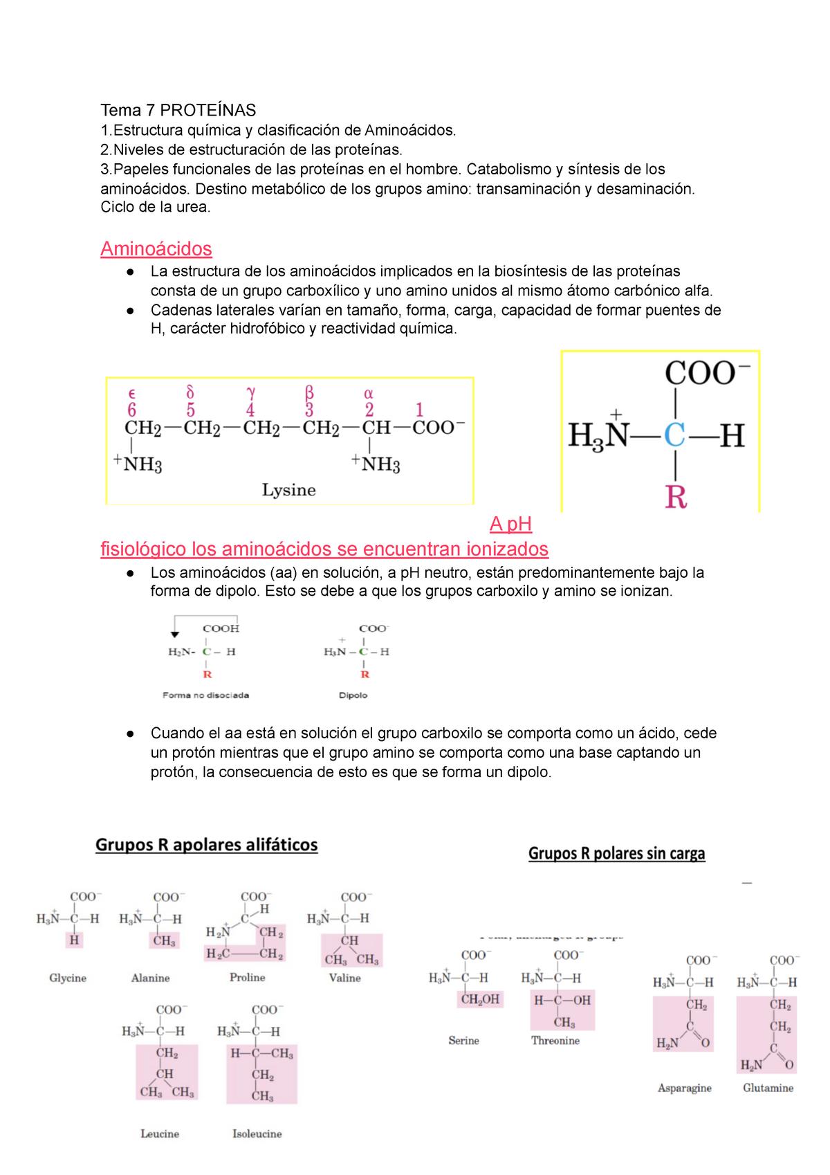Tema 7 Proteínas Apuntes 7 1311105 Bioquímica Studocu