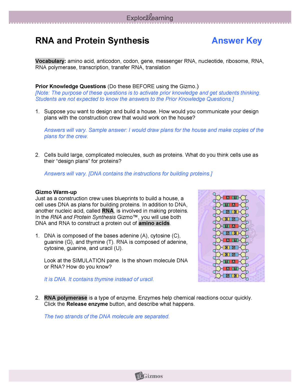 25-RNAProtein Synthesis SE-KEY - RNA and Protein Synthesis Regarding Dna And Rna Worksheet Answers