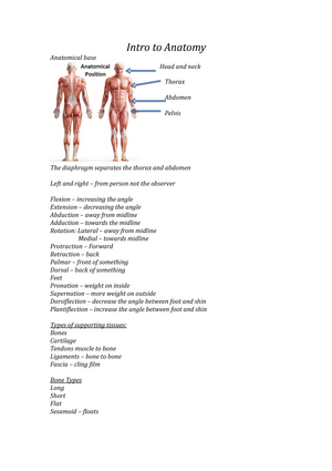 Intro To Anatomy Lecture Notes Semester 1 First Year C100