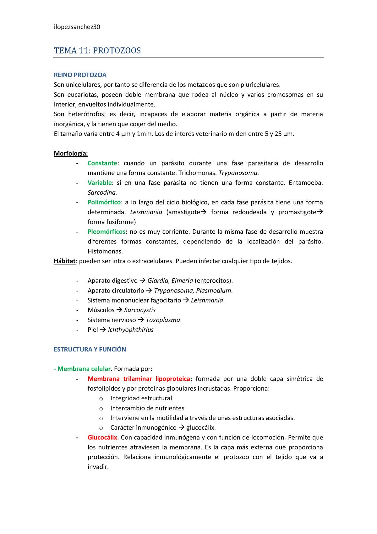 Tema 11 Parasitología Veterinaria Ucm Studocu