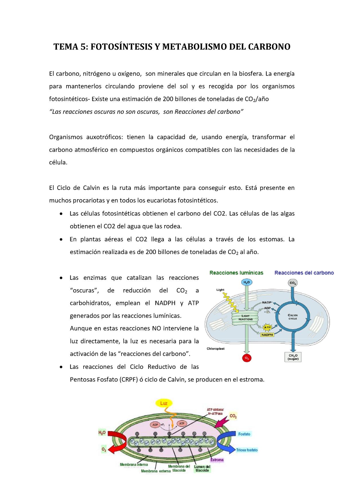 Ayuda con el poder del metabolismo frank suarez pdf