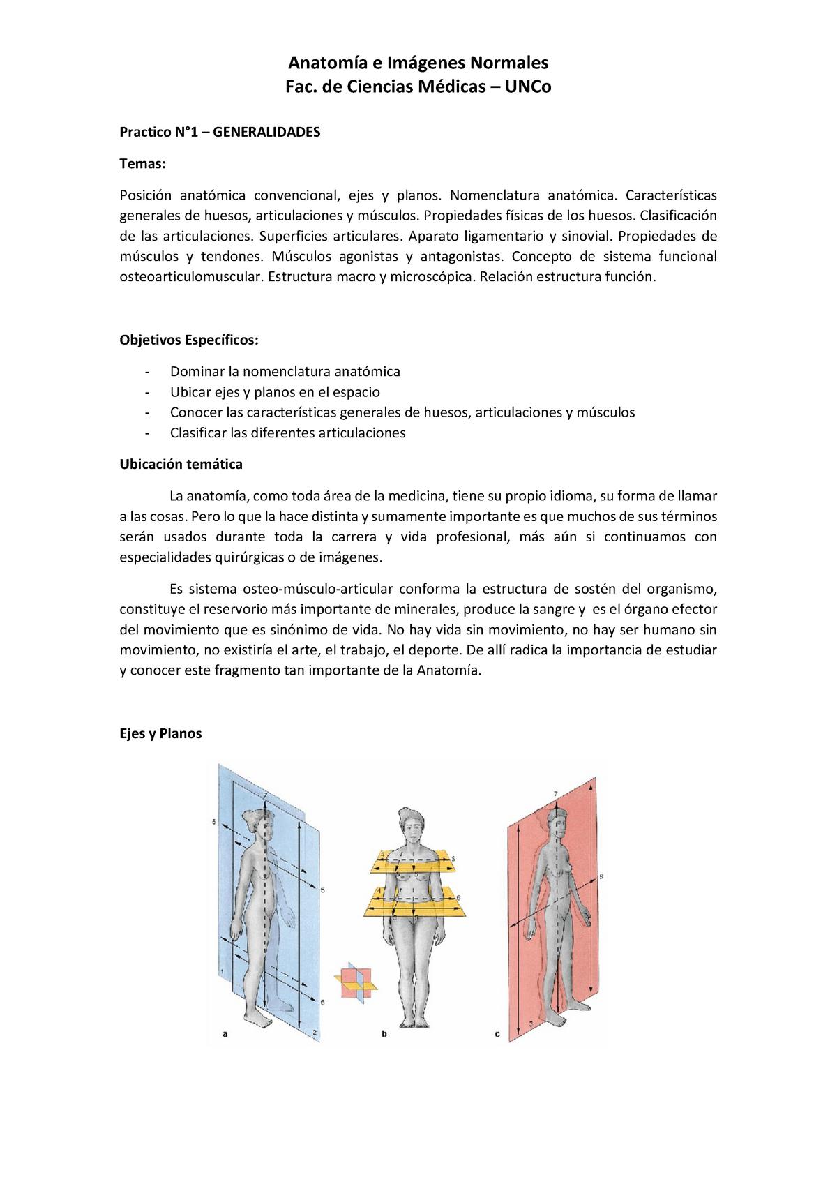 Practico 1 Generalidades Anatomía E Imágenes Normales