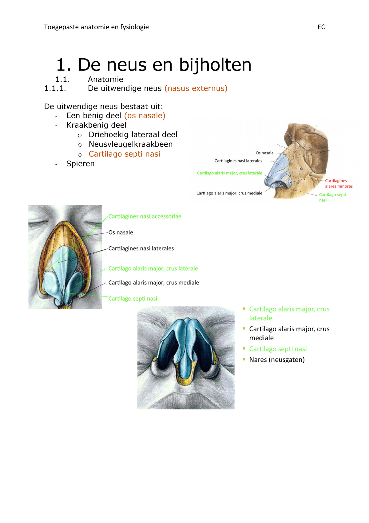 Samenvatting Neus en mond - Anatomie en fysiologie 1 - StuDocu