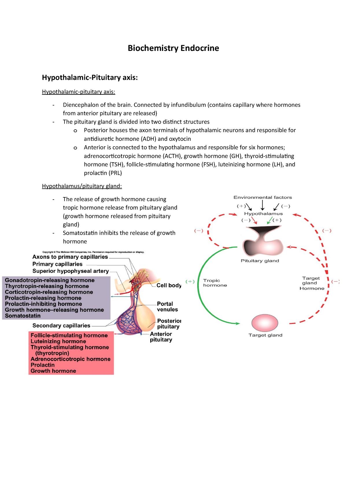 Hypothalamus Pituitary Axis Summary Studocu An example is adh (antidiuretic hormone) which decreases blood pressure. hypothalamus pituitary axis summary