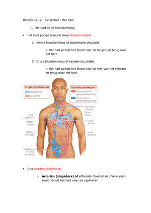 Favoriete Hoofdstuk 12- het hart - Samenvatting Anatomie - fysiologie #KX73