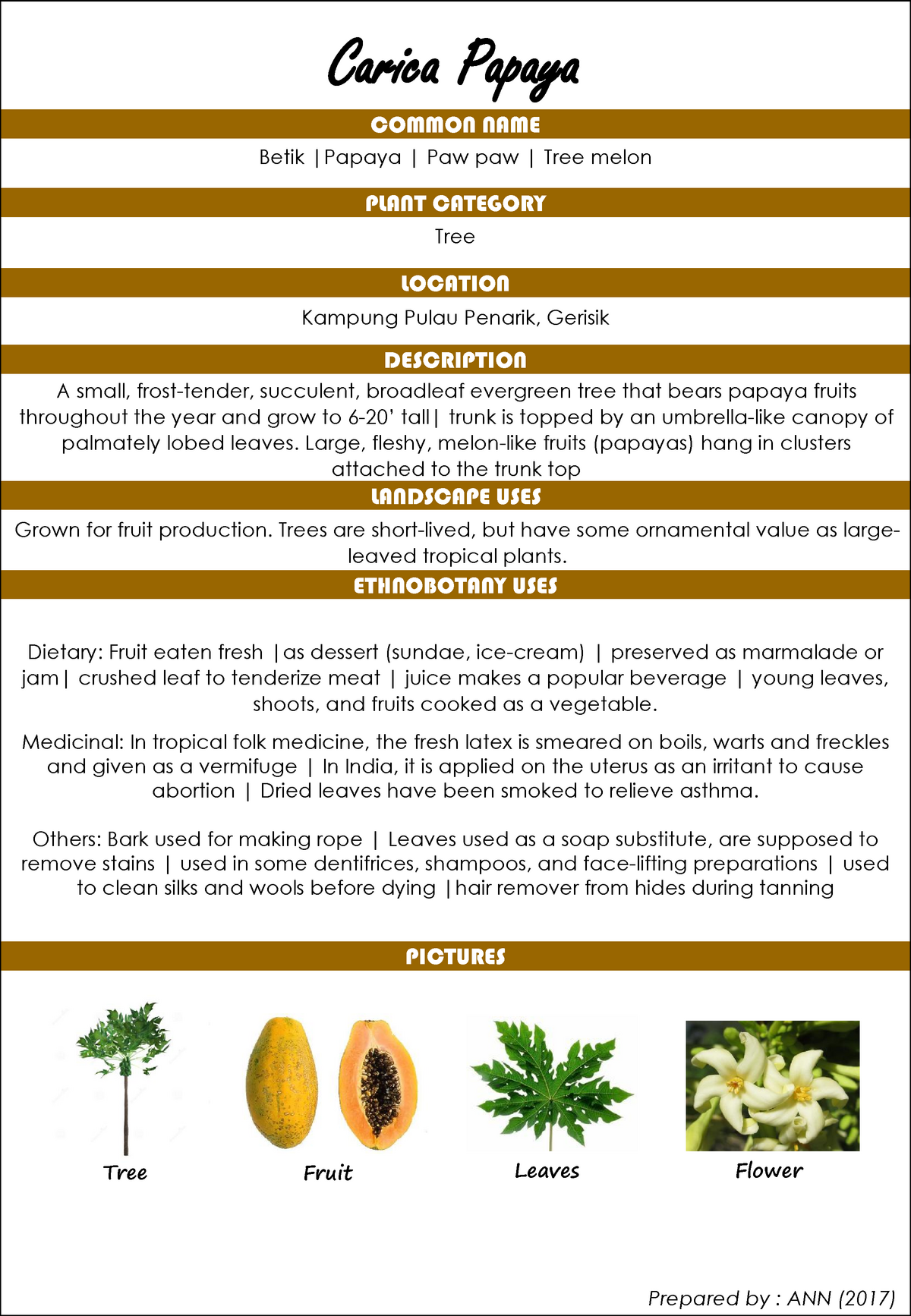 Herbarium Assignment (Tangkak District) - SBEL1532