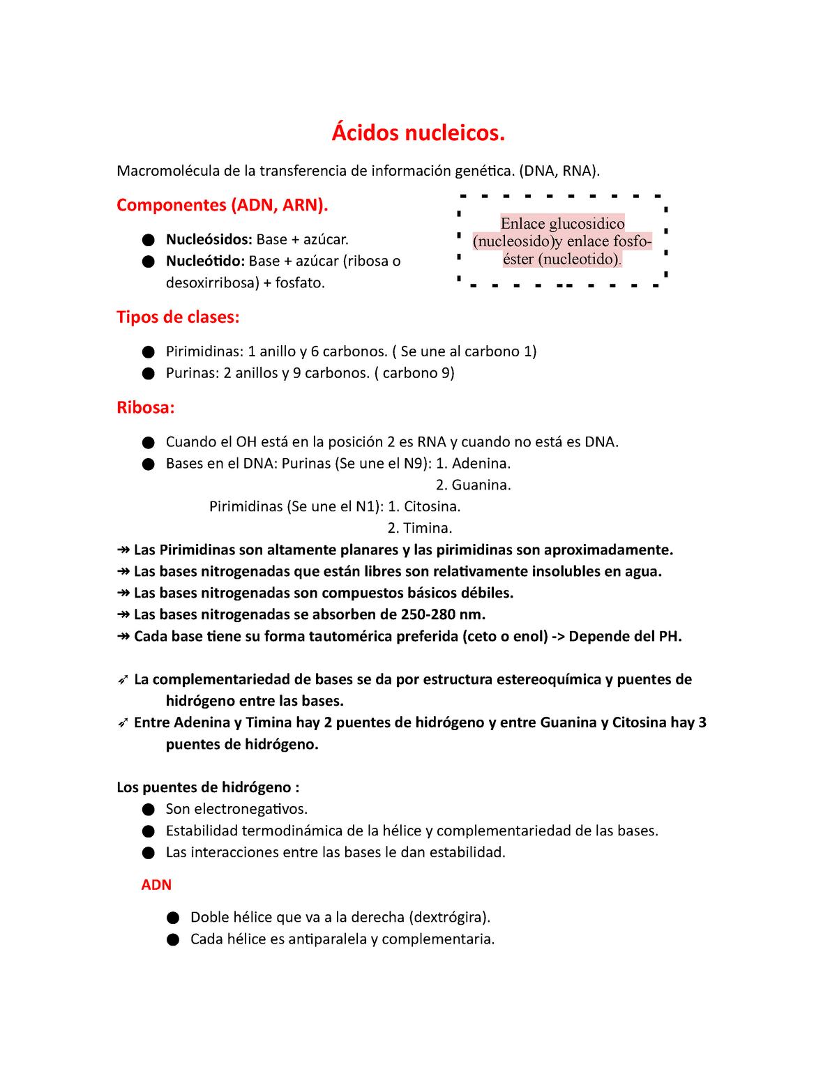 ácidos Nucleicos Biología Molecular 1261 Unijaveriana