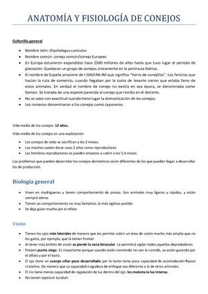 anatomía y fisiología conejos - Clinica y Sanidad Aviar y de Conejos ...