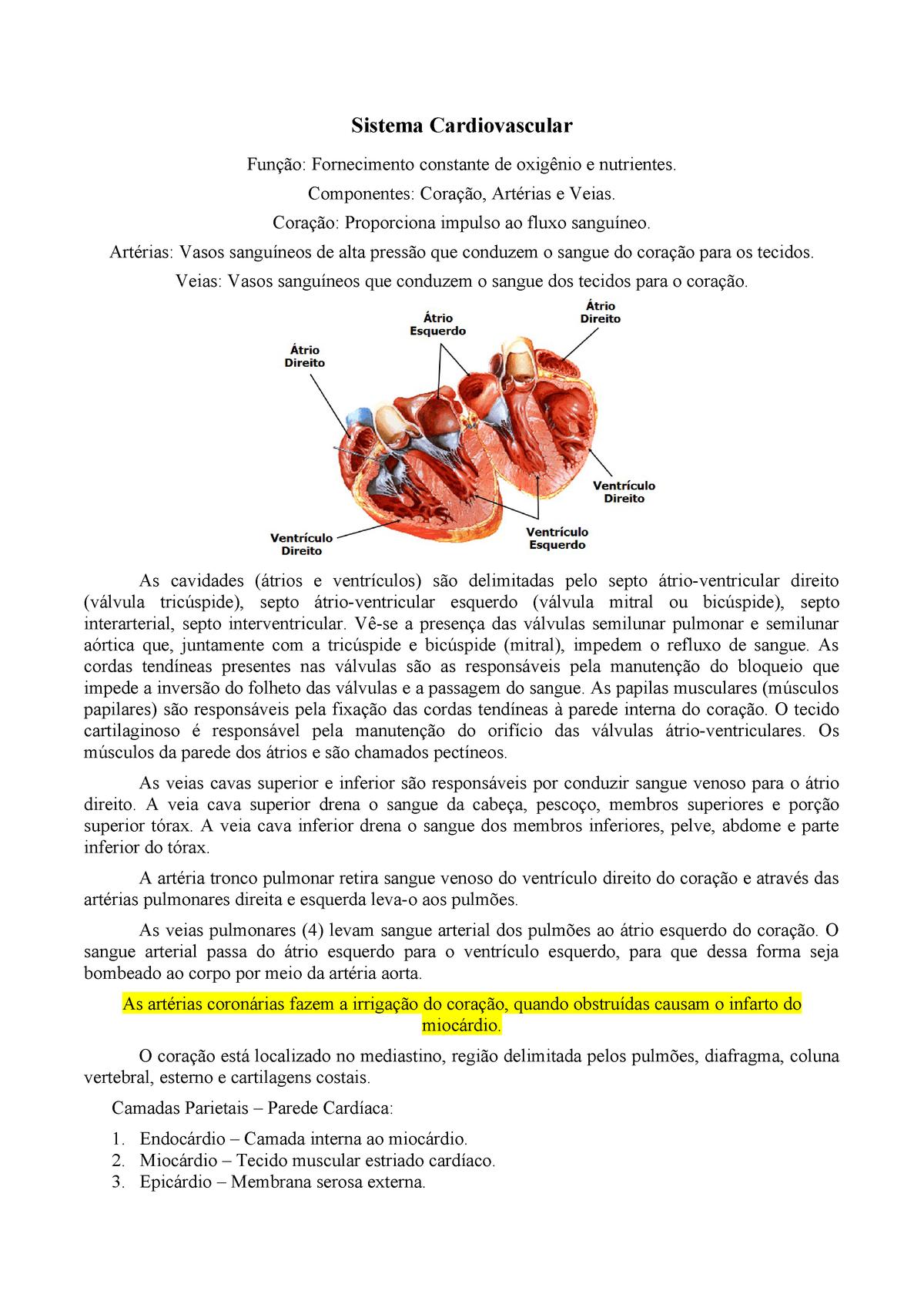 Parte e do do coração sistema circulatório fazem veias as artérias