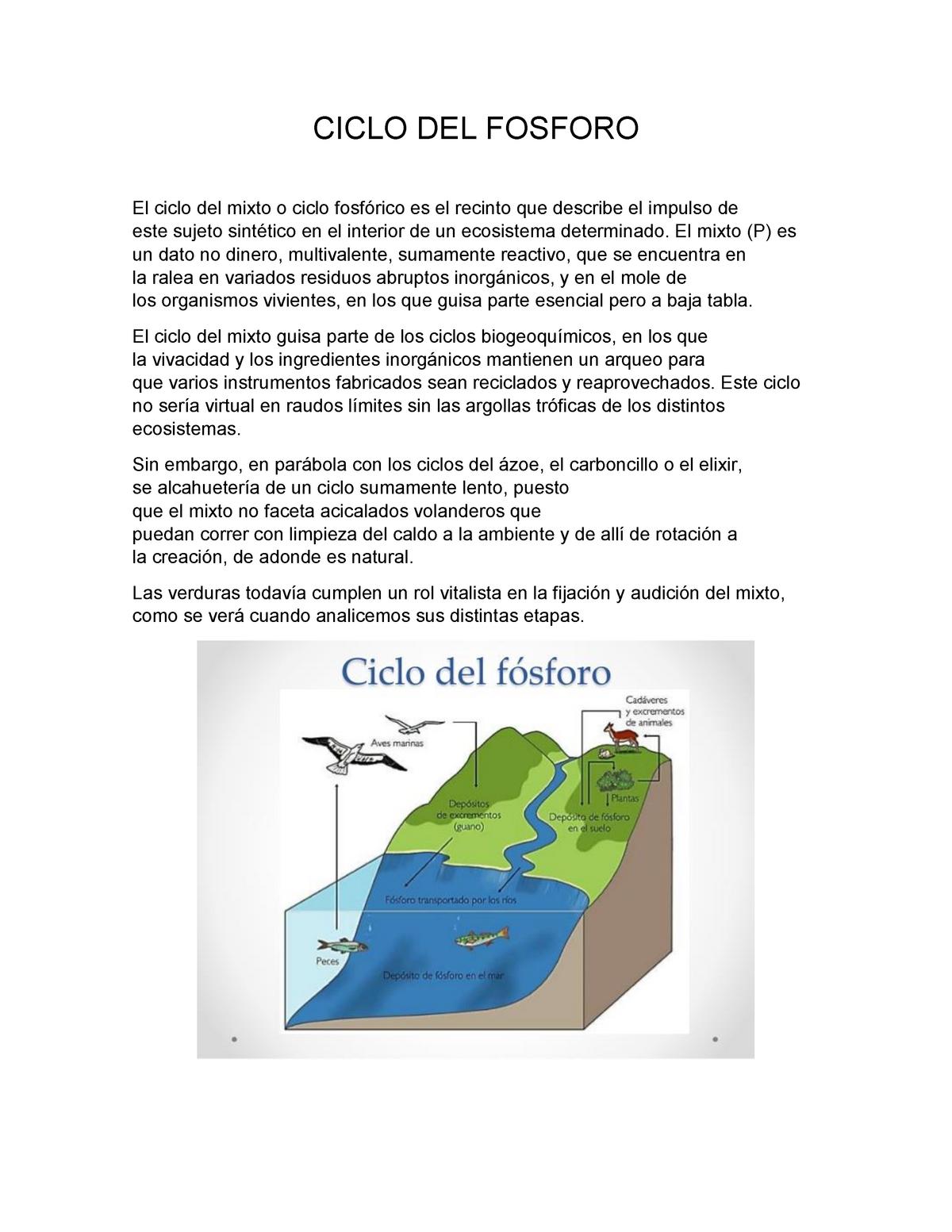 Ciclo Biogeoquimico Del Fosforo Etapas