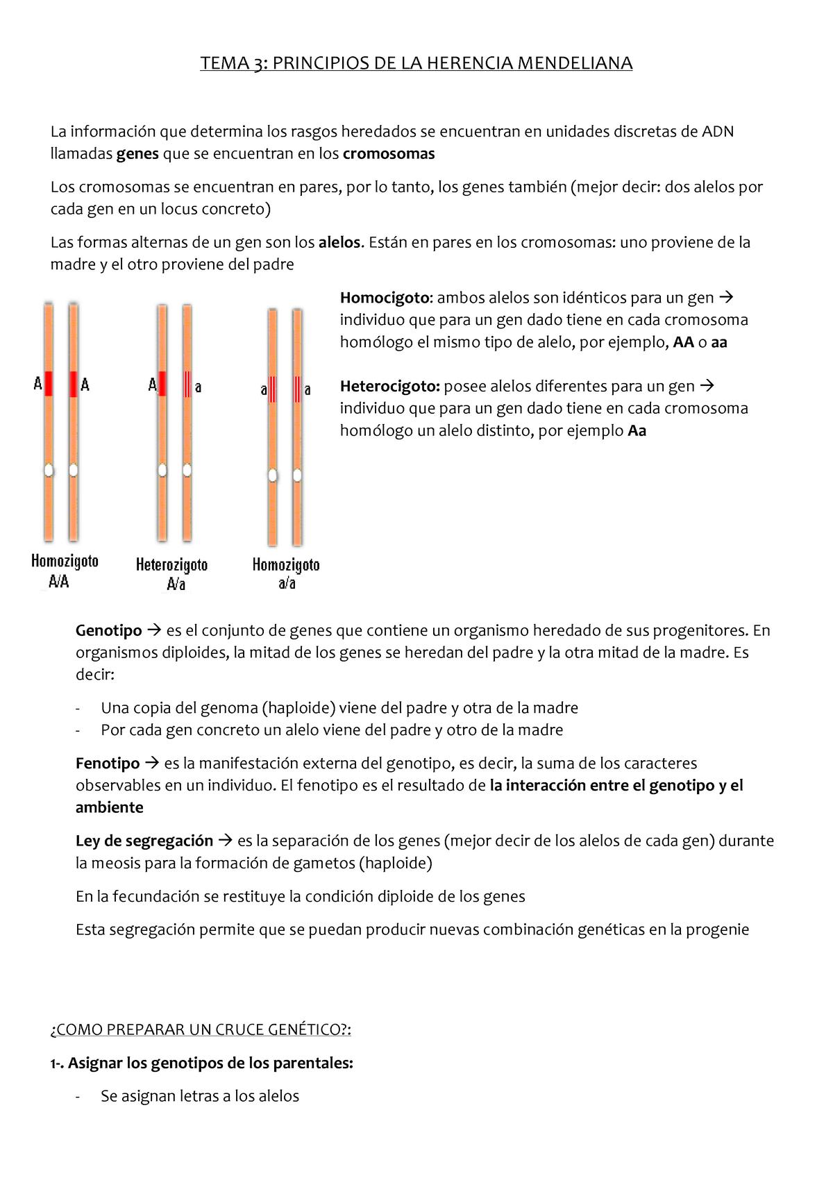 un organismo heterocigoto es el que posee