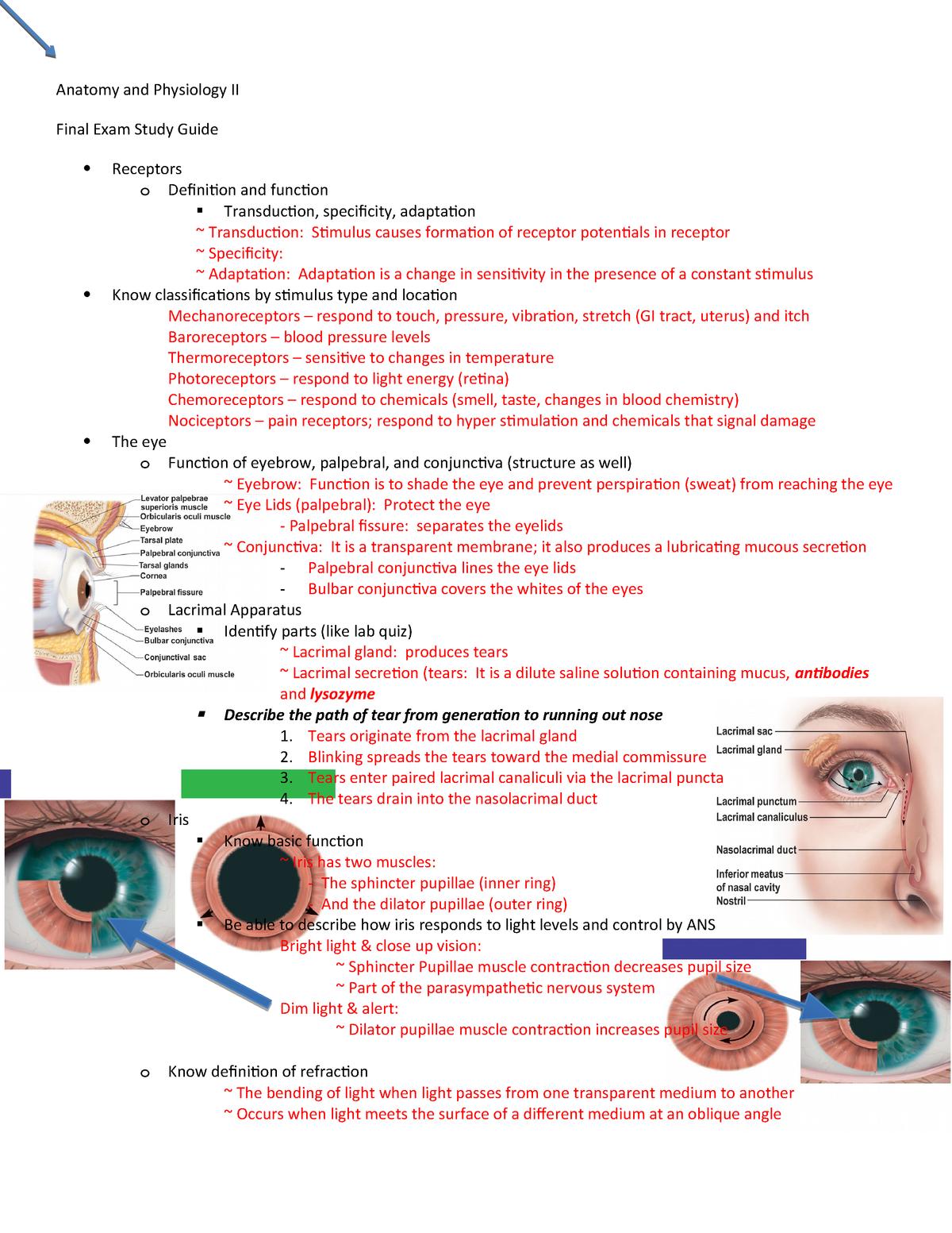 Exam 2015 - HP 105: Human Anatomy & Physiology - StuDocu