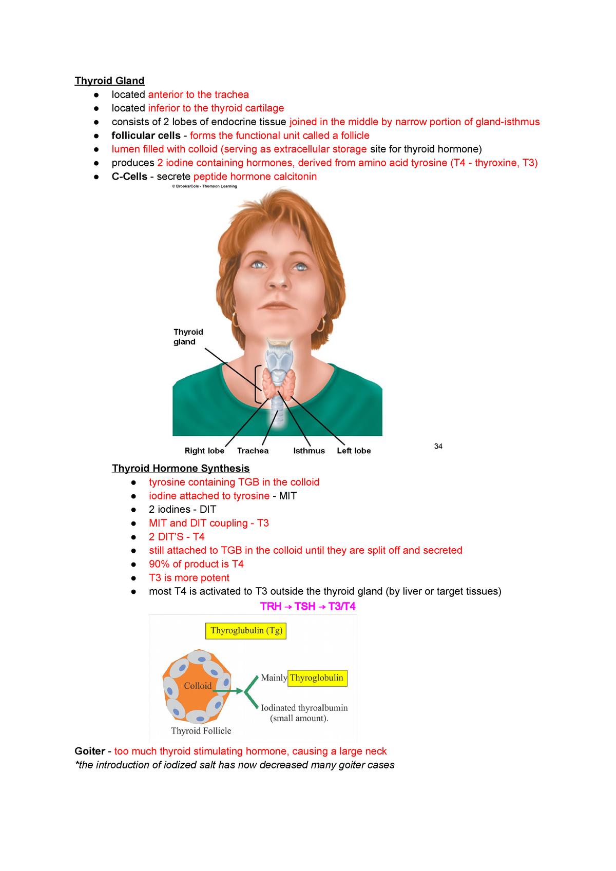 23 - Peripheral Endocrine Glands - Nurs111 Anatomy - StuDocu