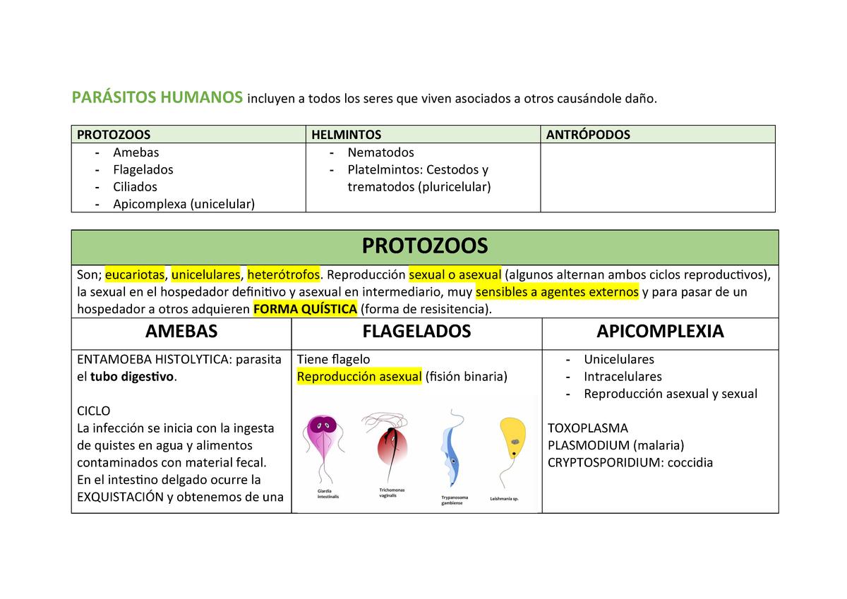 parazita apicomplexa)