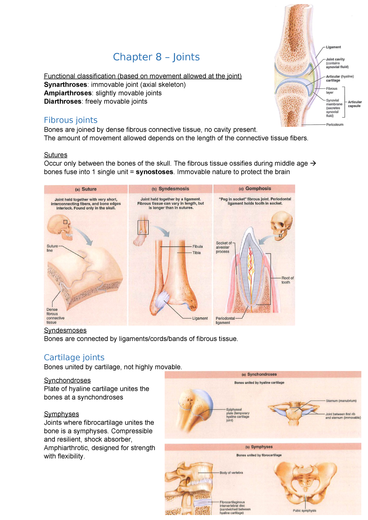 Summary Chapter 8 Joints Studeersnel These joints are immovable the middle radioulnar joint and middle tibiofibular joint are examples of a syndesmosis joint. summary chapter 8 joints studeersnel