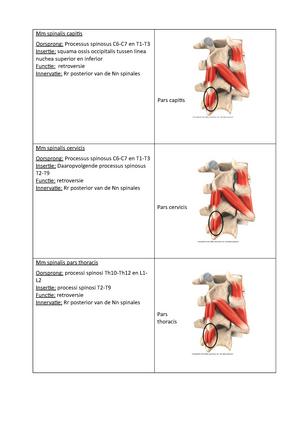 Spierkaartjes met zenuwen - Anatomie 3