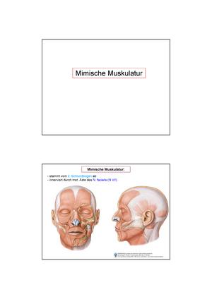 Zusammenfassung - Mimische Muskulatur - Einführung in die Anatomie