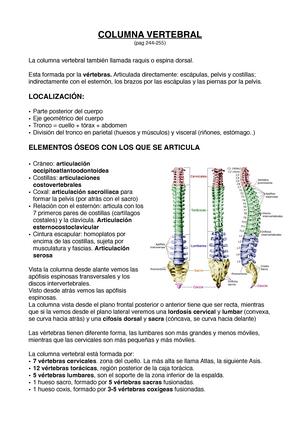 Columna vertebral - 21650: Anatomía y Fisiología del Sistema ...