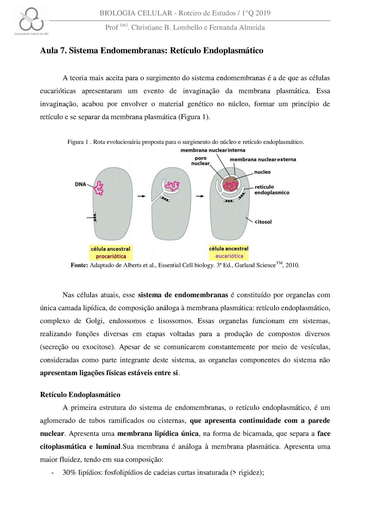 Aula 7 Sistema Endomembranas Biologia Celular Nht1053 15