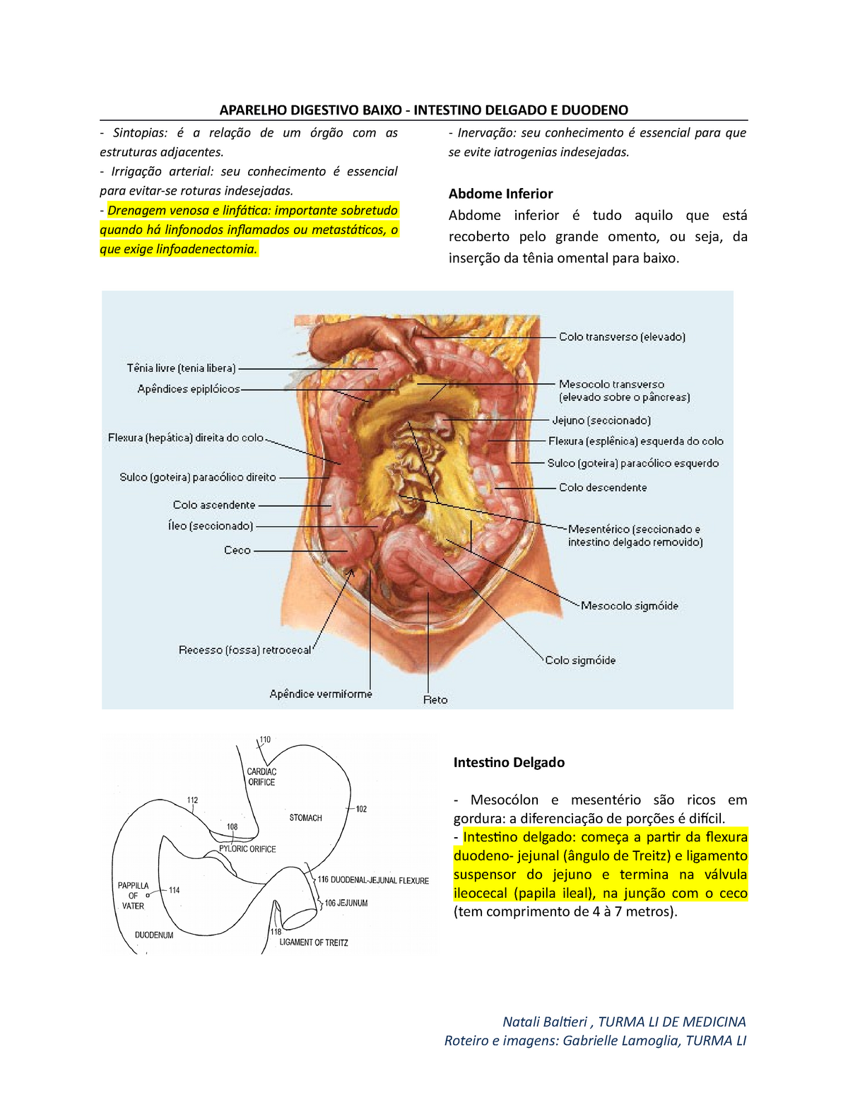 Intestino Delgado E Grosso Anatomia Unip Studocu