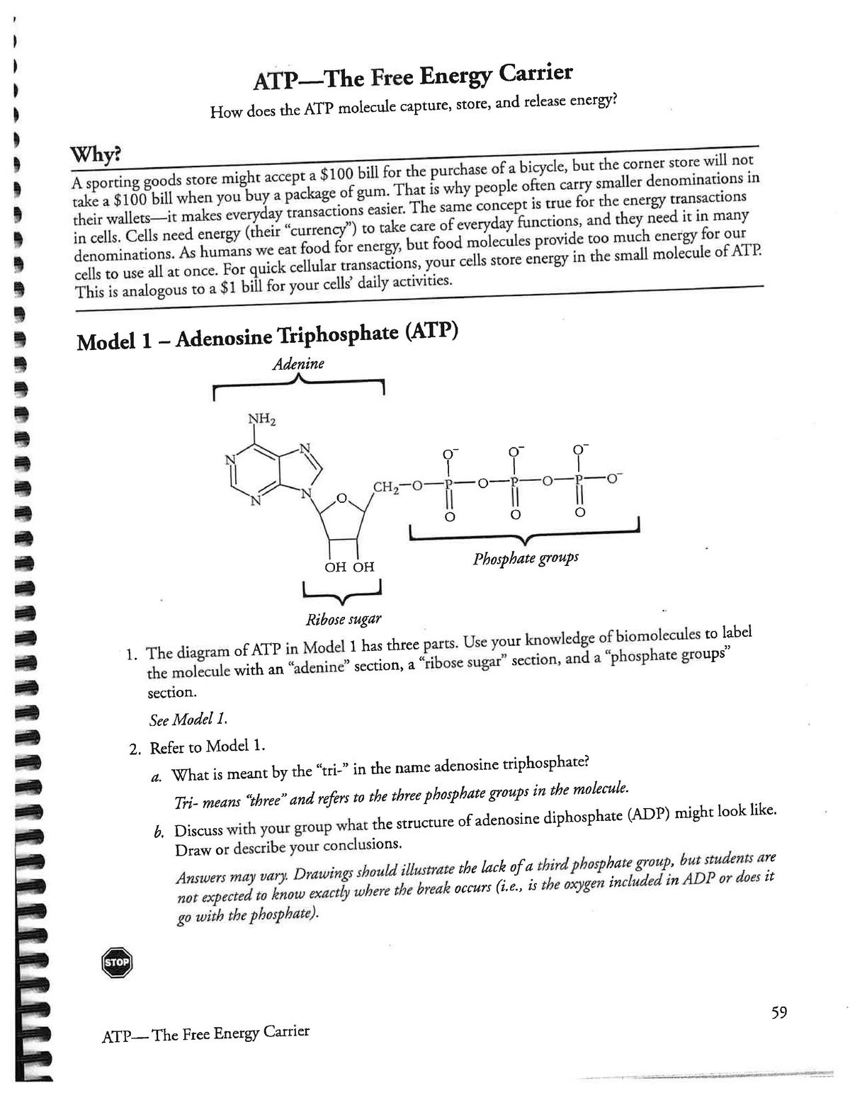 Pogil ATP Key - Answer key - BIO 121 - Oakton - StuDocu