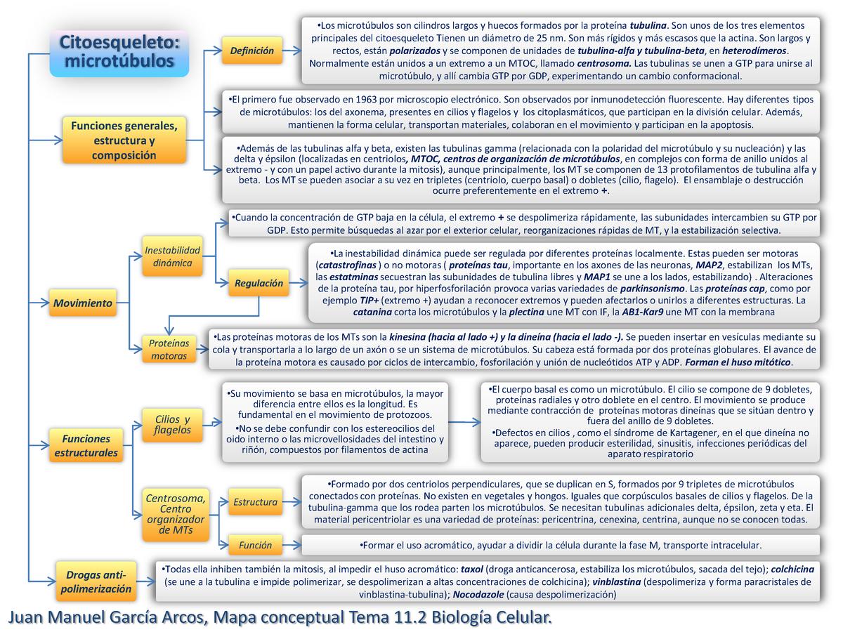 Mapa Conceptual Tema 11 2 Biología Celular 202005 Upo