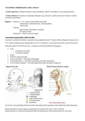 Dolore al collo - Cause e Sintomi