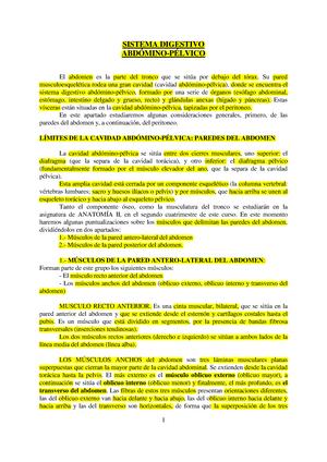 Apuntes - Sistema digestivo, genitourinario y tórax - 45870 ...