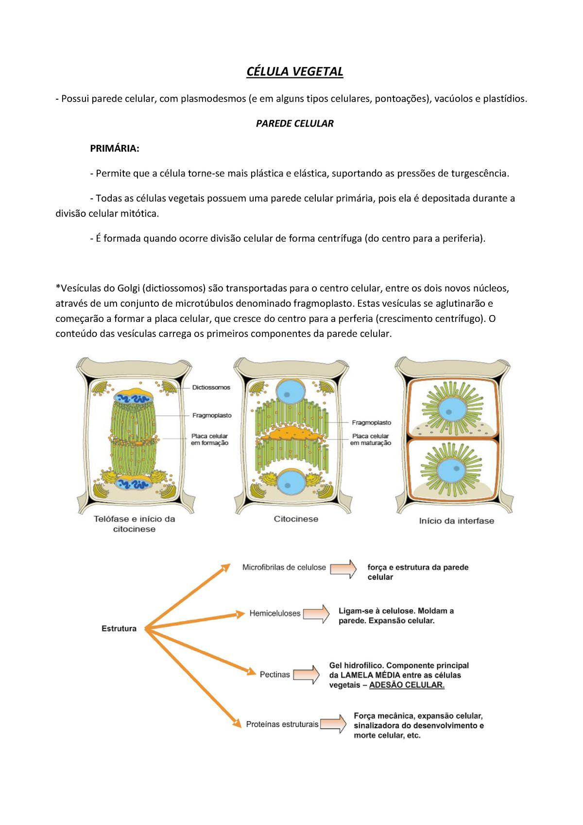 Resumo Morfologia Vegetal Bio02048 Ufrgs Studocu