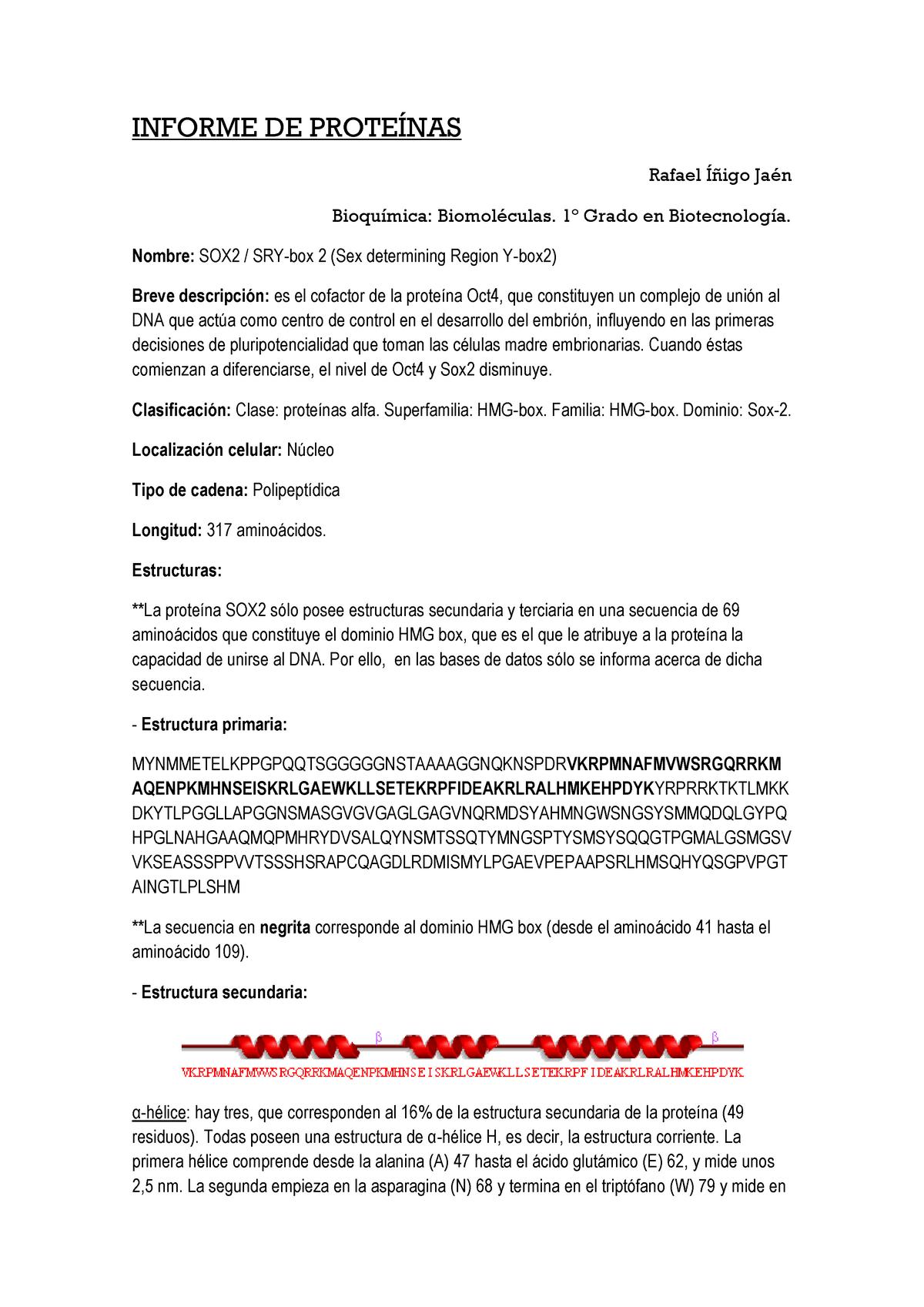 Informe De La Proteína Sox2 Bioquímica Biomoléculas Studocu