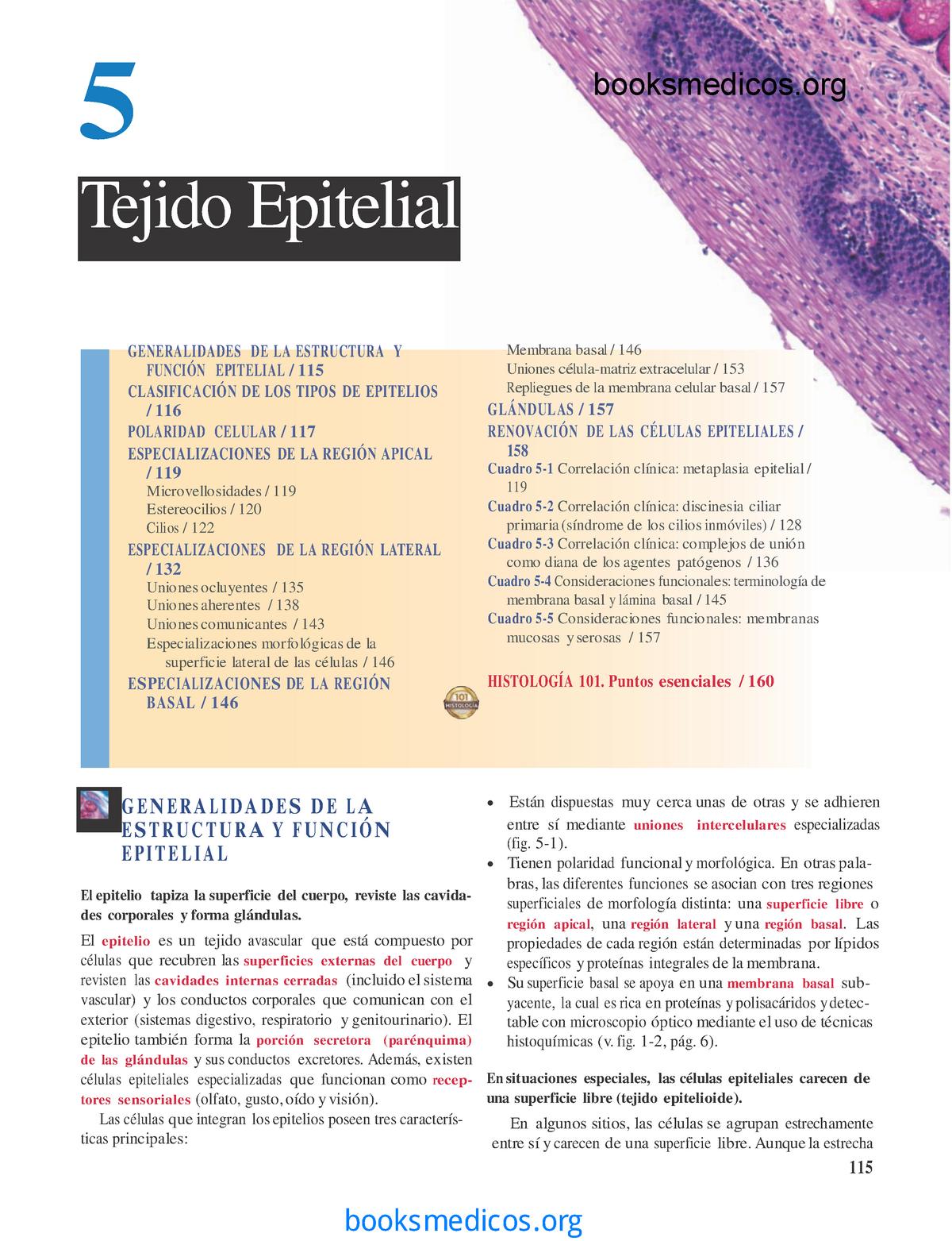 diabetes tipo 1 histologia ross