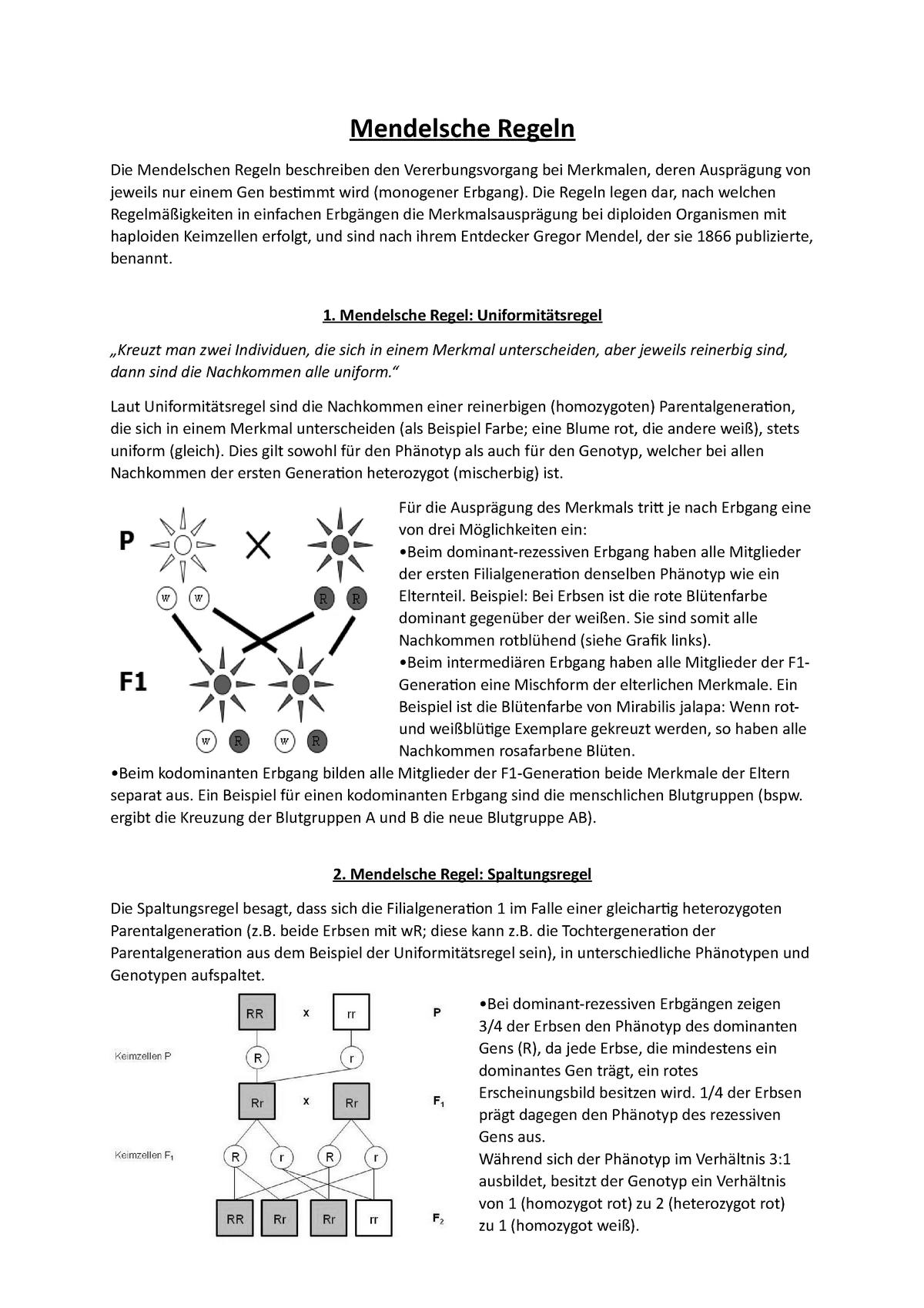 Zytogenetik Mitschriften 20   Mendelsche Regeln Die Mendelschen ...