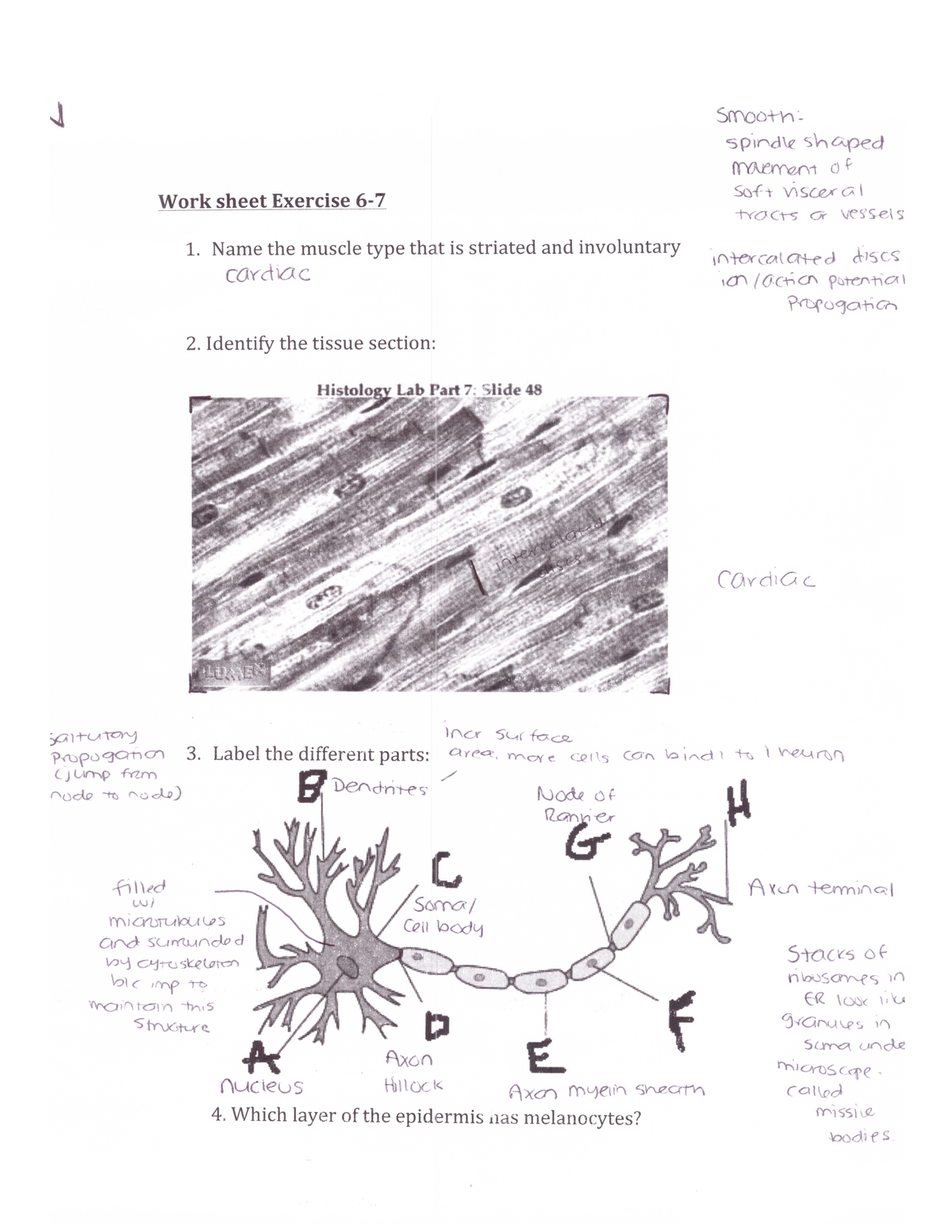 A&P I Lab- Exercise 6-7 - BIOL 3455: Human Anatomy and Physiology