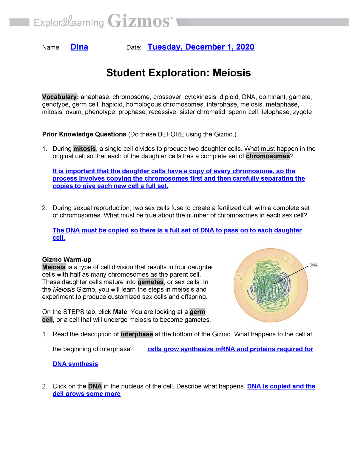 Meiosis Gizmo Answer Key Activity B / Activity A Steps in ...