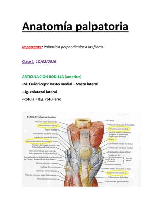 Apuntes - Anatomía Palpatoria (Pelvis + Miembro inferior) - 21654 ...