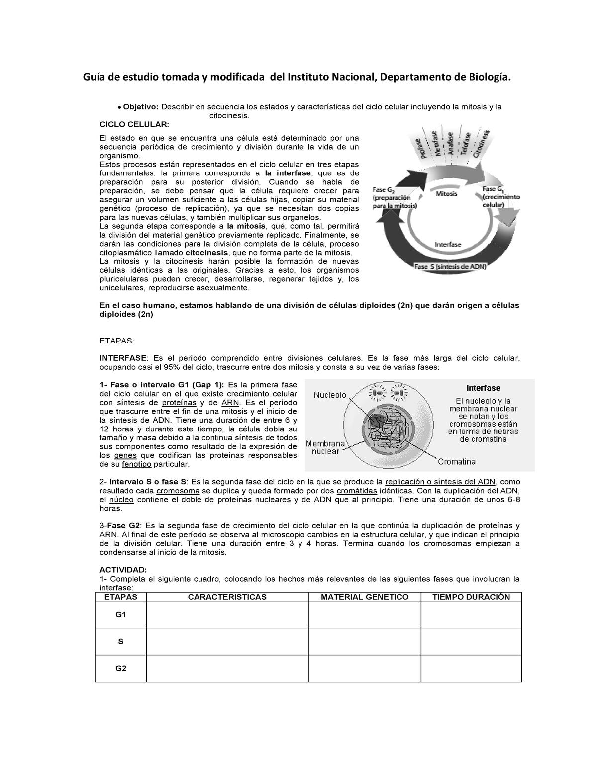 Taller Ciclo Celular Mitosis Y Meiosis Genetica 1620413