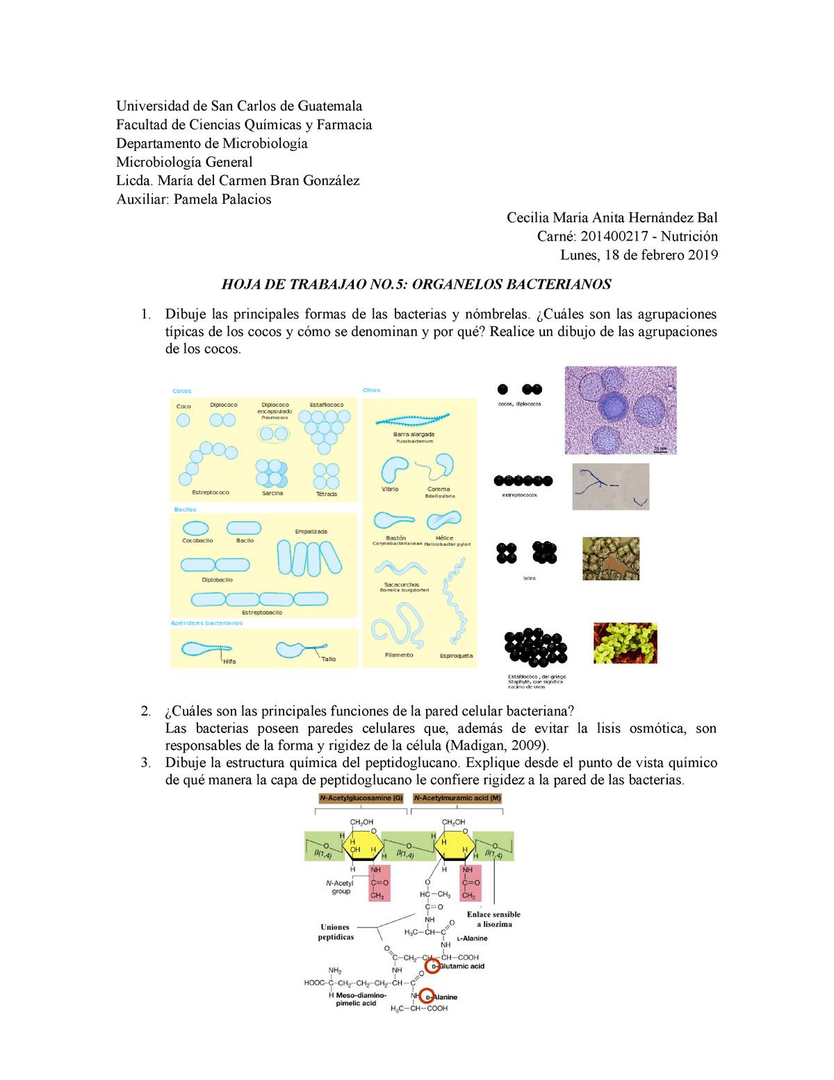 Hoja De Trabajo No 5 Organelos Bacterianos Parte Ii Studocu