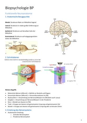 BP Zusammenfassung - Biopsychologie