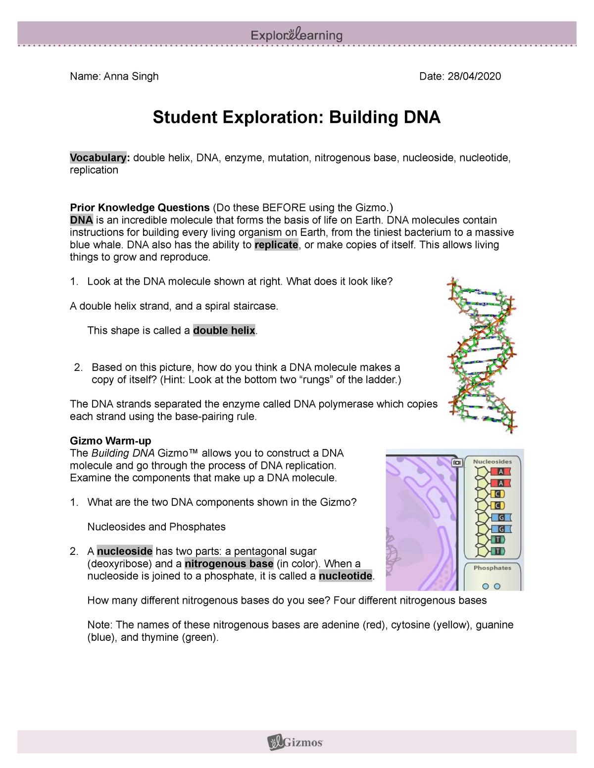 Building Dna Gizmo Answer Key  Student Exploration Sheet ...