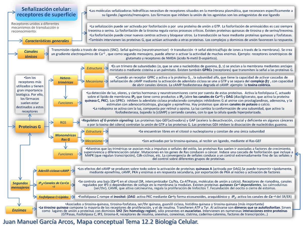 Mapa Conceptual Tema 12 2 Biología Celular 202005 Upo