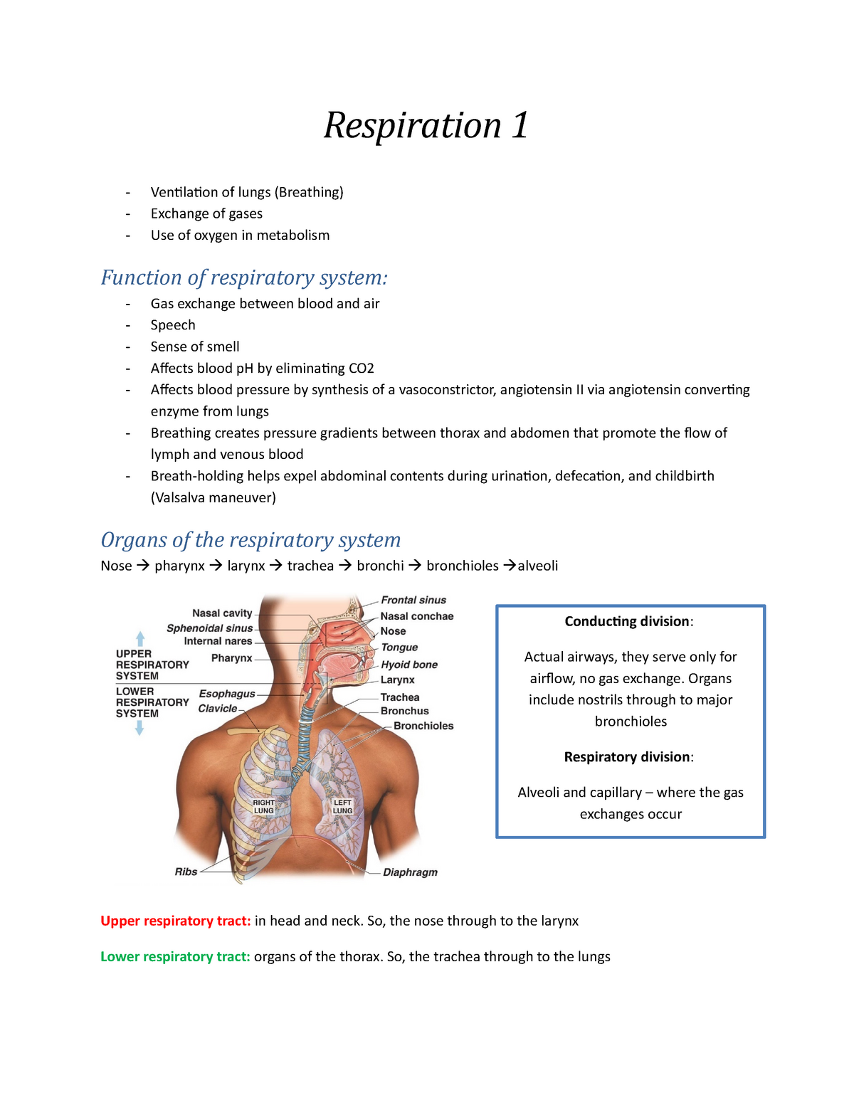 Human Anatomy and Physiology Lecture Notes - Respiration - 091400