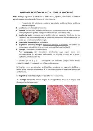 Apuntes, leccion 13-17 - casos de los temas resueltos con imagenes ...