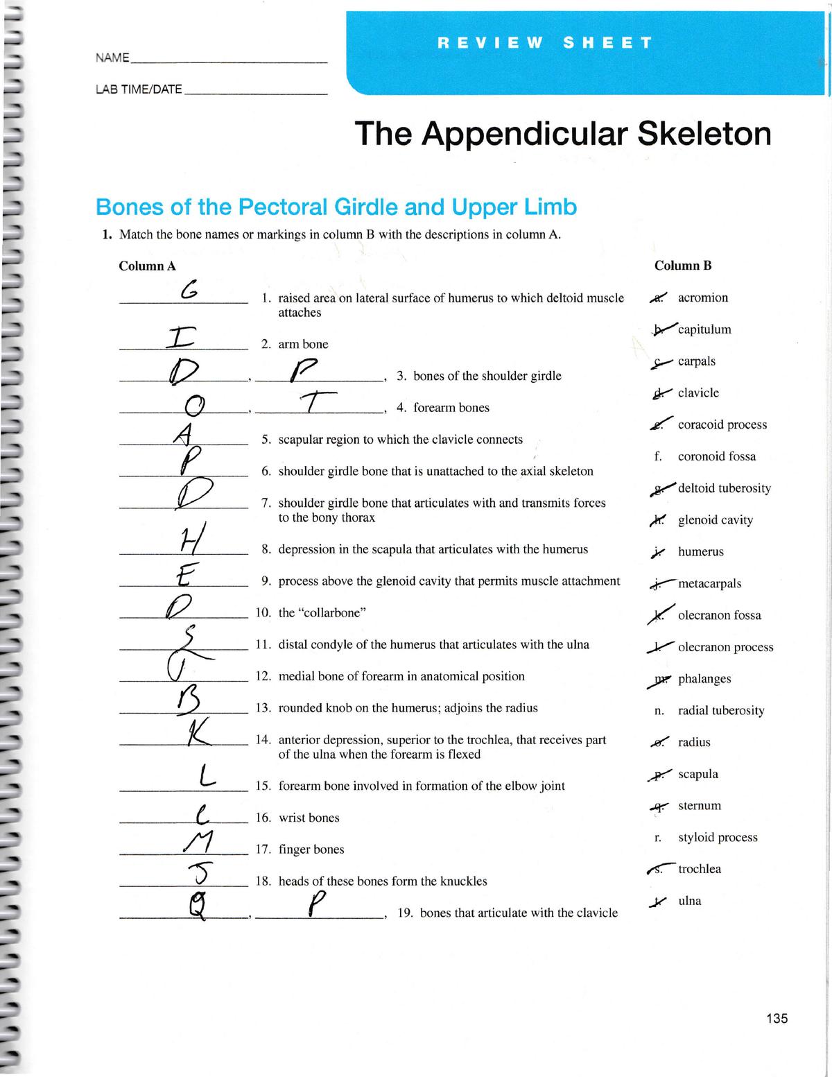 The apendicular skeleton answers - BSC 2085C - StuDocu
