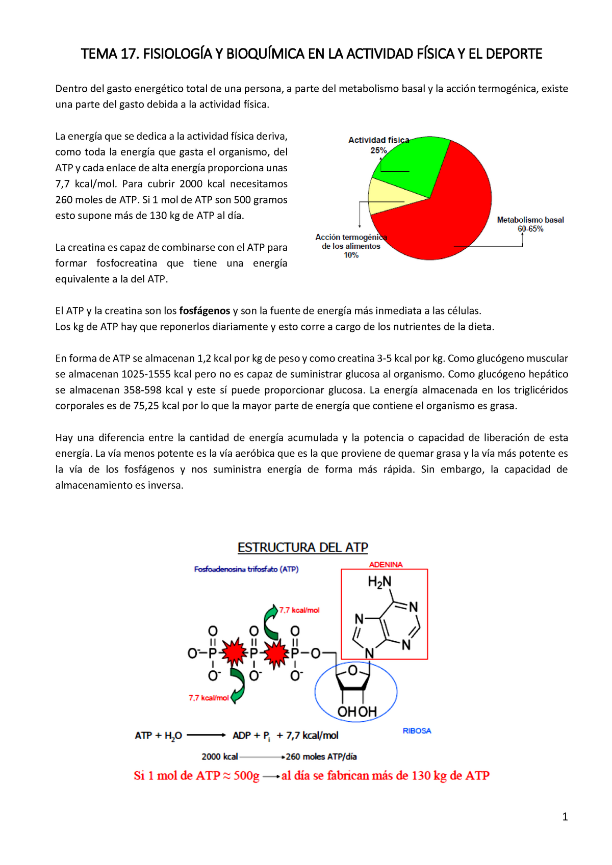 TEMA 17. FISIOLOGÍA Y BIOQUÍMICA EN LA ACTIVIDAD FÍSICA Y..