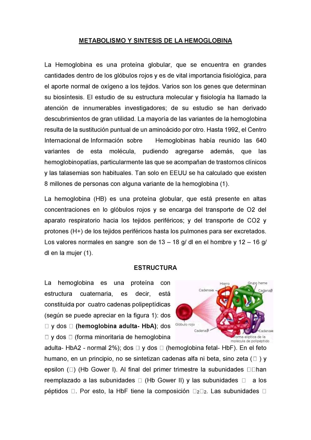 Metabolismo Y Sintesis De Hb Sem Fisiología Humana 101315