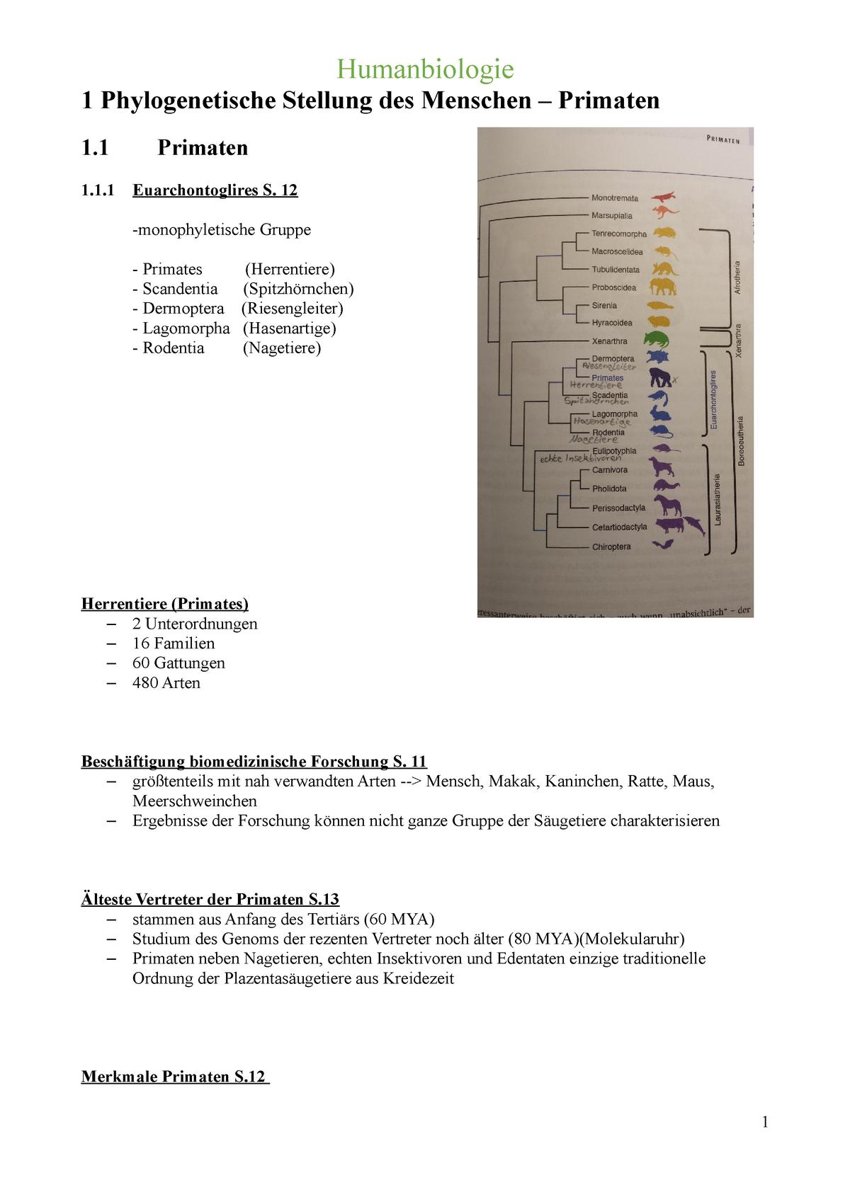 Reine Matchmaking-Bewertung dota 2